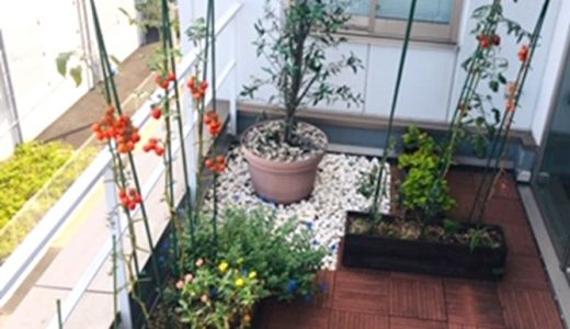 本社屋4階 -菜園経過-