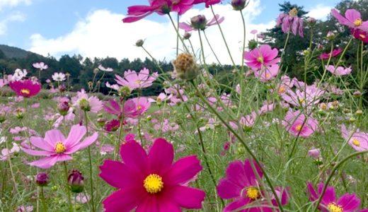 信州の黒姫高原に行ってきました!