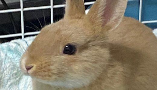 小さな工夫で with ウサギ